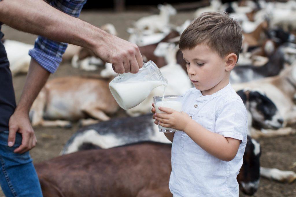 chłopiec pije kozie mleko