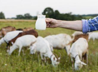 Kozie mleko nie tylko do kąpieli