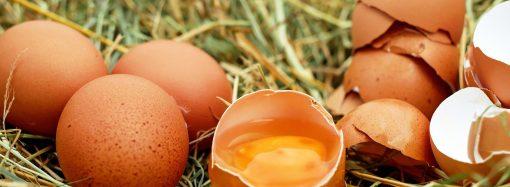 Wiejskie jaja. Gdzie i jak kupować?
