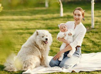 Jak przygotować psa na pojawienie się dziecka w domu?