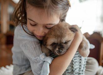 Mamo chcemy mieć psa! Pies do domu – rasy najlepsze dla dzieci