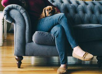 Sprawdzone sposoby na sierść psa