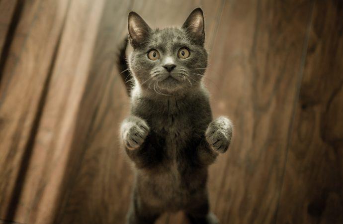 Jak dbać o czystość w domu, w którym mieszka kot?